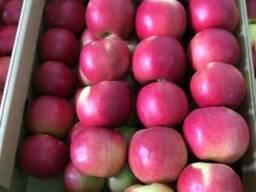 Яблоки apples - photo 2