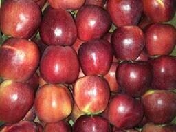 Яблоки apples - photo 3