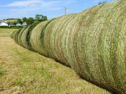 500 Bales of Large Round Mixed Grass