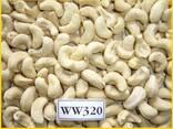 Cashew Kernel Nut - photo 1