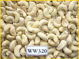 Cashew Kernel Nut - photo 1