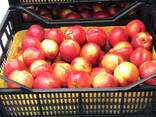 Sweet and juicy Peach, Nectarine and Cherry time. - photo 4