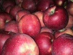 Яблоки apples - фото 1