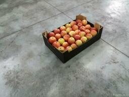 Яблоки apples - фото 6